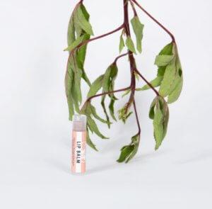 Lip-balm-hibiscus,-orange